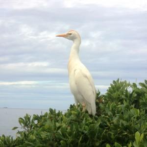 """Figura 21. Maui. Un simpatico abitante delle isole Hawaii (non mi ricordo il nome…). Qualcosa tipo """"Ha Ha"""" o giù di lì..."""