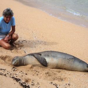 Figura 34. Kauai. Anche la foca monaca non si crea problemi a dormire vicino a mia moglie. Vederla uscire e stendersi sulla spiaggia è un'emozione che non si può fotografare.