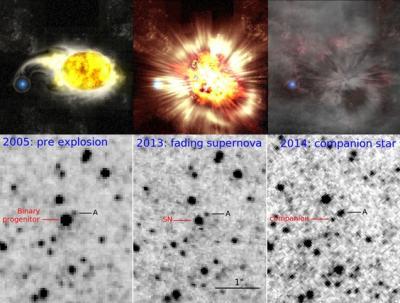 Un'immagine, che combina visione artistica e visione reale, molto affascinante: in alto mostra ciò che è realmente accaduto e in basso quello che è stato visto. A sinistra la supergigante gialla di elevata luminosità. Al centro la supernova (sembra più debole, ma è un problema di lunghezza d'onda usata). A destra, quando la nebulosità è più trasparente, ecco comparite la compagna blu e caldissima. Bravo Gastone! Fonti: immagine superiore, Kavli IPMU; immagine inferiore, NASA/Kavli IPMU/Gastón Folatelli