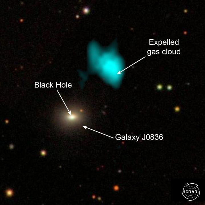 L'immagine della galassia J0836, con il suo buco nero supermassiccio e la nube di gas espulsa. Fonte: The International Centre for Radio Astronomy Research