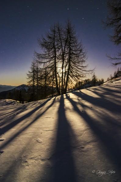 DSC_1590-ombre alberi nome