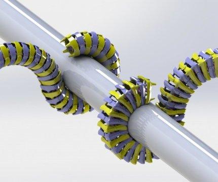 """Tra i molti vantaggi della coda """"quadrata"""" vi è il maggior numero di punti di contatto con la superficie che viene afferrata. Fonte: Michael Porter/Clemson University"""