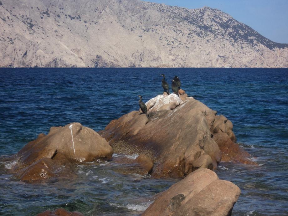 Alcuni cormorani si asciugano a debita distanza