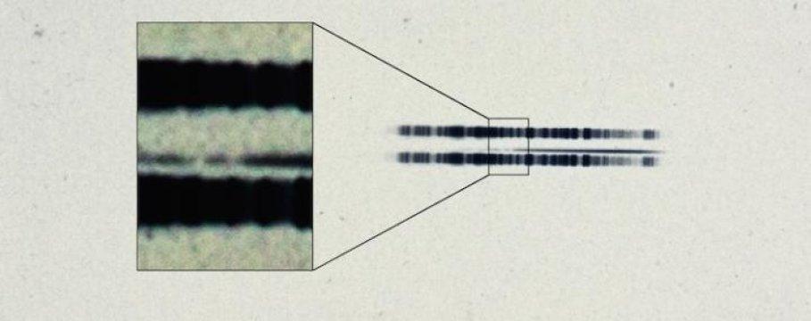 La lastra fotografica che mostra lo spettro del 1917 della stella di van Maanen. Si notano chiaramente le linee del calcio nella striscia più stretta (il vero spettro, mentre le alter due fasce scure sono due spettri di calibrazione). Fonte. The Carnegie Institution for Science