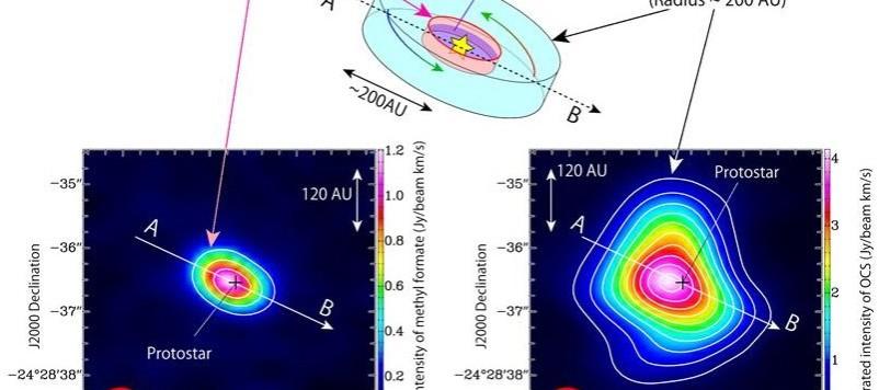 Un'illustrazione schematica del gas che precipita verso la protostella. Un disco di raggio 50 UA è quello più interno, a sua volta circondato da una struttura gassosa di raggio pari a circa 200 UA. L'OCS esiste nell'inviluppo gassoso, mentre il formiato di metile si spinge molto più internamente. Nel riquadro di sinistra si vede la distribuzione del formiato. Nel riquadro di destra quello dell'OCS, decisamente più estesa verso l'esterno. Fonte. ALMA (ESO/NAOJ/NRAO), Oya et al.