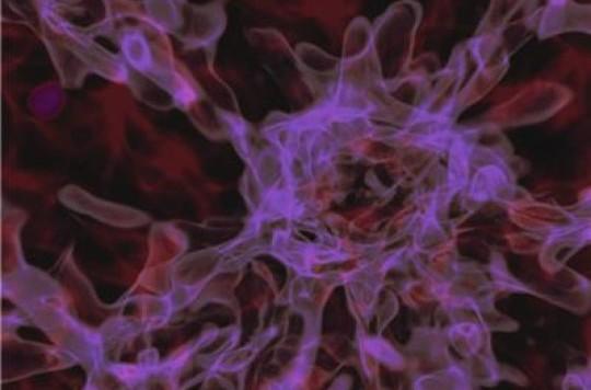 Un momento della simulazione al computer del collasso diretto verso un buco nero. Anche se nell'articolo non mi sembra se ne dia particolare evidenza, si dice, comunque, che si notano molto bene i filmenti di materia oscura… Forse è bene mettere le mni avanti per non essere consideratoa una ricerca di serie B (boccaccia mia…). Fonte: Aaron Smith/TACC/UT-Austin