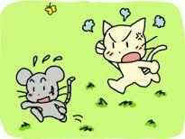 gatto-rincorre-topo