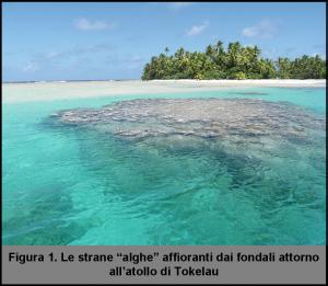 atollo2