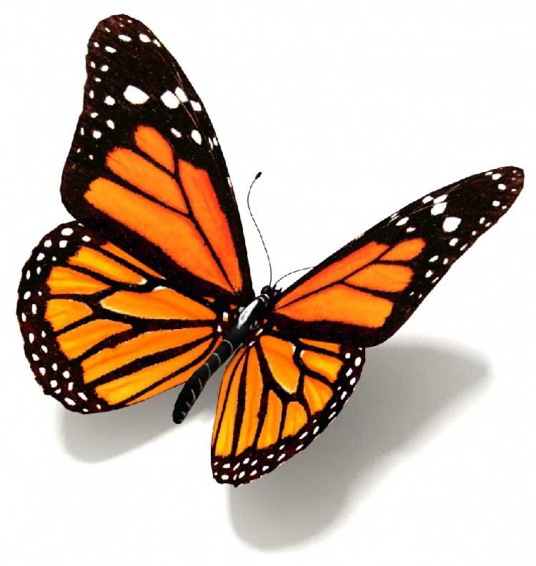 Farfalle cosmiche l 39 infinito teatro del cosmo for Foto farfalle colorate