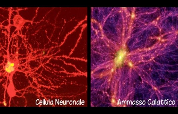 La figura confronta una cellula neuronale del cervello con un ammasso galattico. Fonte: Nature's Scientific Report