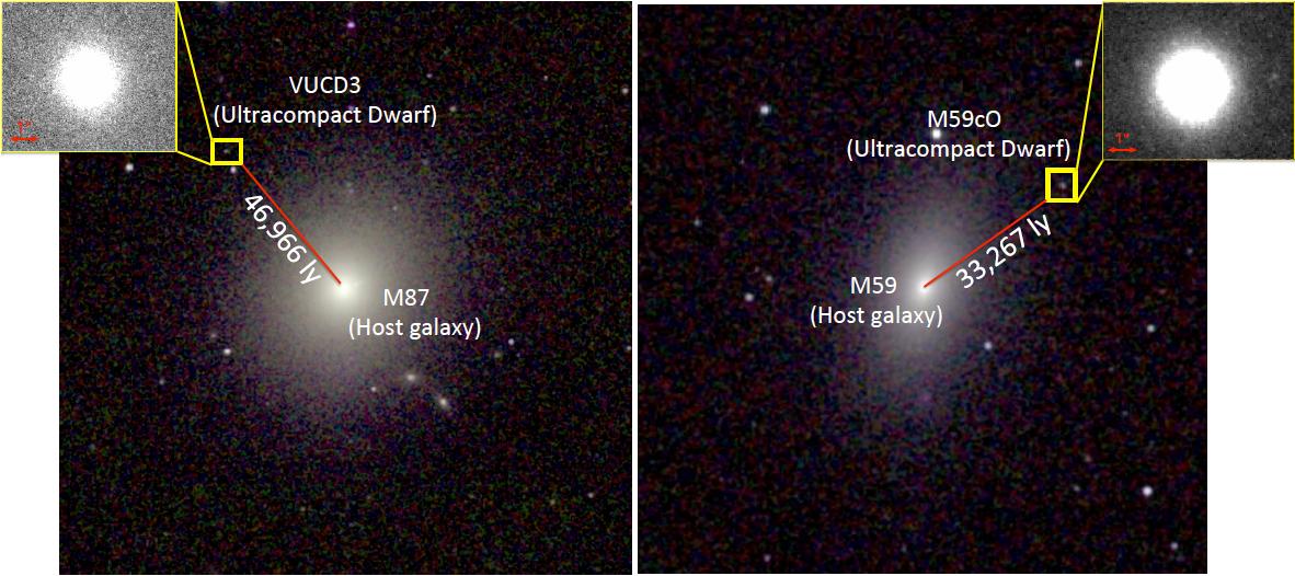 Le due galassie nane compatte scoperte da poco, insieme alle loro gigantesche antagoniste che sono riuscite ad abbandonare senza essere ingoiate del tutto. Soprattutto, si sono salvati i loro super buchi neri. Fonte: NASA/Space Telescope Science Institute