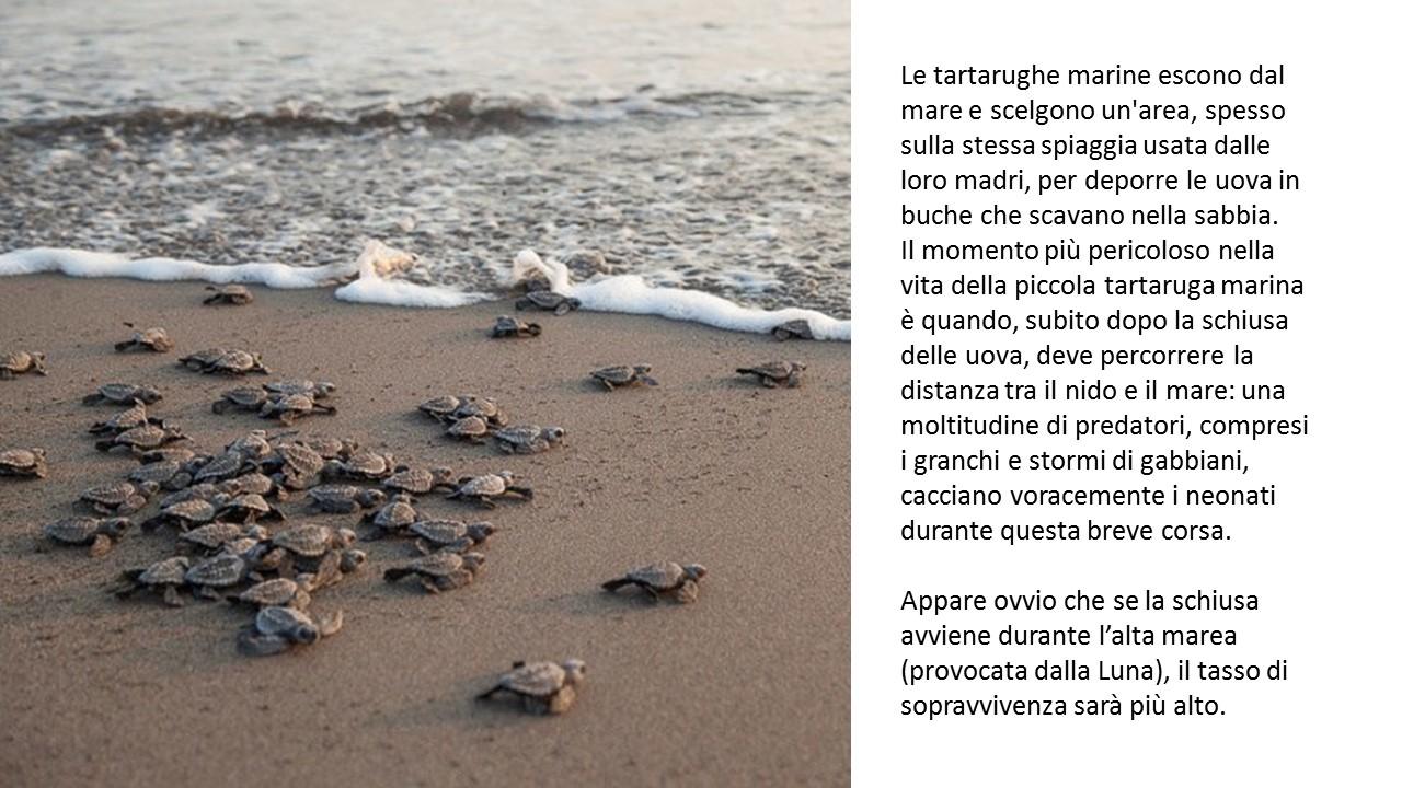 tartarughe neonate