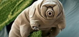 tardigrade-300x168