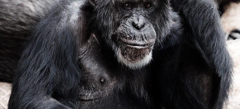 evoluzioone uomo
