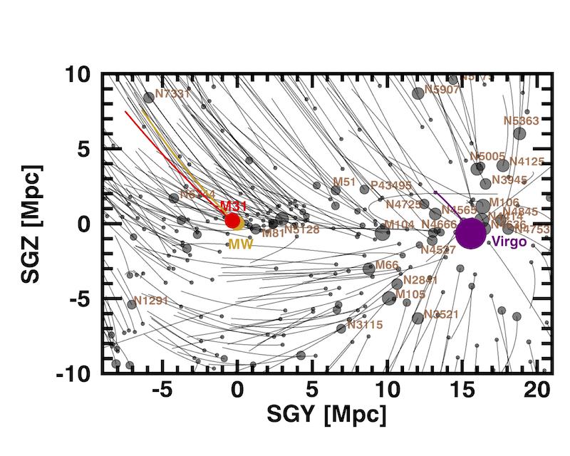 La nostra galassia (MW, gialla) e la sua compagna Andromeda (M31, rossa) partecipano a un flusso straordinario che le sta portando da una zona poco popolata, chiamata il Vuoto Locale, verso l'ammasso della Vergine, rappresentato dal cerchio porpora. Molte galassie sono cadute o cadranno in questo grande attrattore, ma noi forse eviteremo l'inghiottimento, ma non l'unione con Andromeda. Fonte: R. Brent Tully