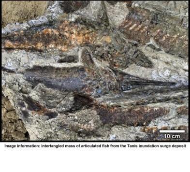 Un gruppo di pesci la cui vita è stata fermata dal grande impatto dello Yucatan. Abitanti di una città di 66 milioni di anni fa...