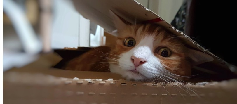 Cat peeking out of a box