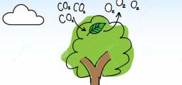 albero-dell-ossigeno-32204744
